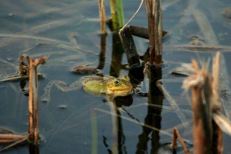 croak: frog