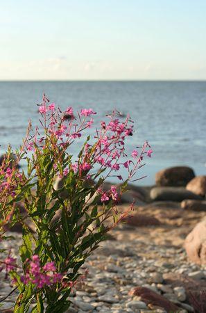 seacoast: Field flowers on seacoast