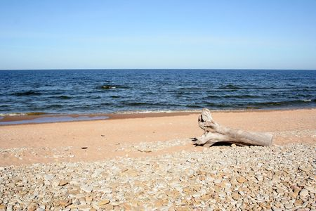 snag: Snag on a coast of the Baltic sea in Toila
