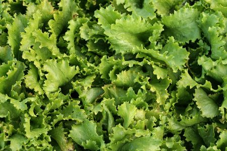 a close-up image of of a green salad photo