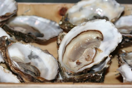 Oysters on the half shell Imagens - 3995170