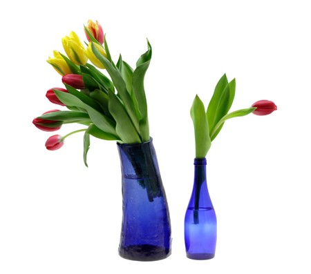 Fresh tulips in beautiful dark blue vase photo