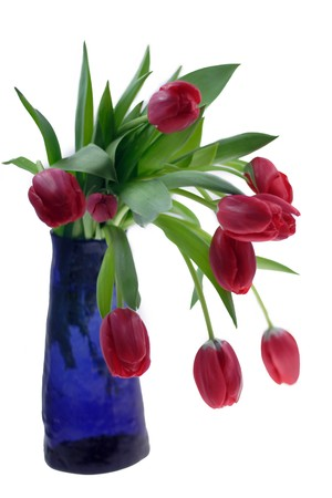 Tulips Stock Photo - 4295310