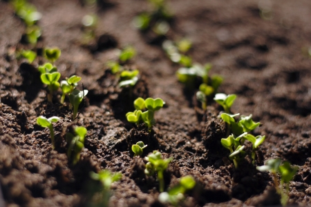 Green Seedling Growing Out Of The Soil Stock Photo - 4572410