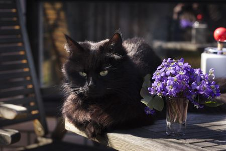 Cat and flowers Of Spring photo