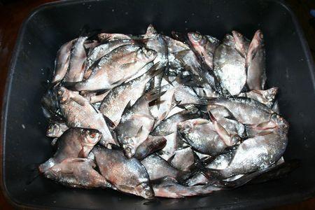 fresh fish background  photo