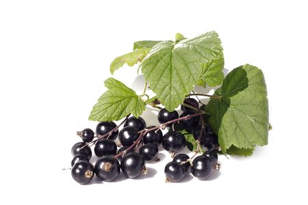 Black currant with leaves on white background.