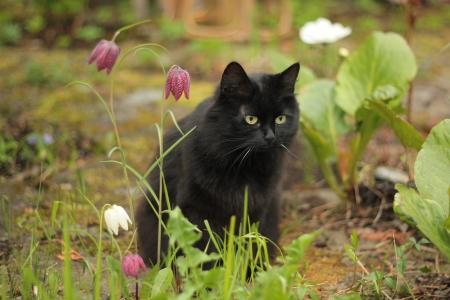 black cat Banque d'images