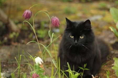 black cat Stock Photo - 13976385