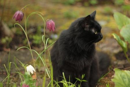 black cat Stock Photo - 13976384