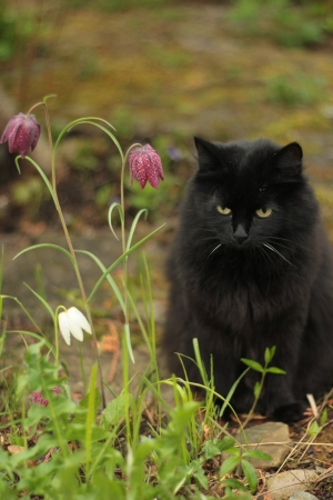 black cat Stock Photo - 13976409
