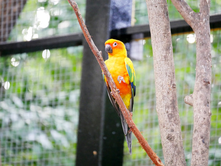 Conures are a diverse, loosely defined group of small to medium-sized parrots. They belong to several genera within a long-tailed group of the New World parrot