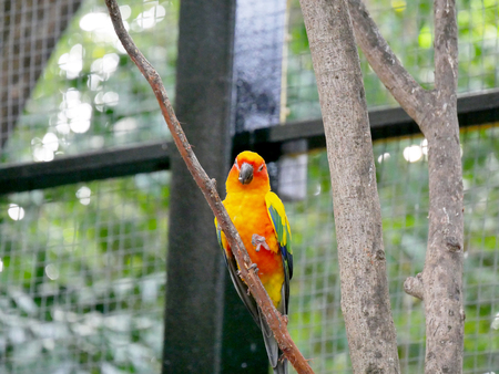loosely: Conures are a diverse, loosely defined group of small to medium-sized parrots. They belong to several genera within a long-tailed group of the New World parrot