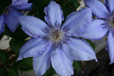 Rare Blue Flower