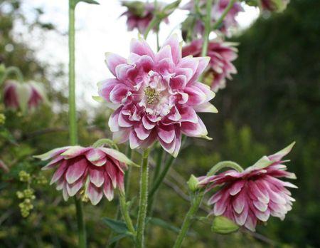 奇妙な星形の花