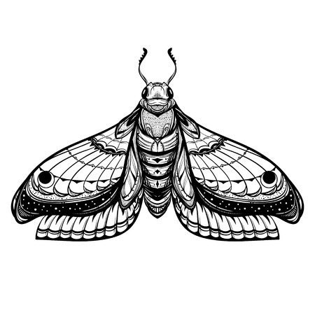 Detailed realistic sketch of a moth.