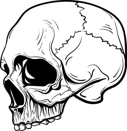 hand drawn anatomy skull with different tones and lines. Vector illustration Illustration