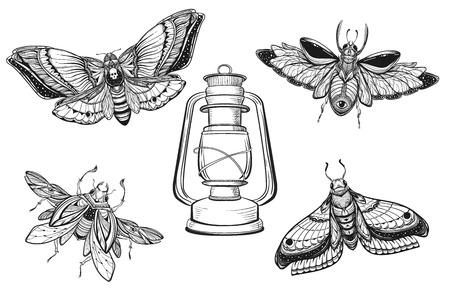 bug tattoo drawing set. Scarab bug illustration Illustration