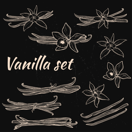 Vanilla pods and flowers Stock Vector - 89041498