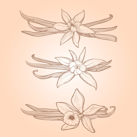 Vanilla pods and flowers