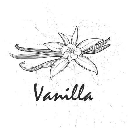 Vanilla pods and flowers. Stock Vector - 89041507