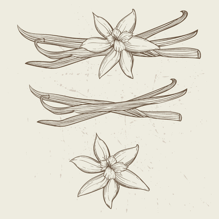 Vanilla pods and flowers.