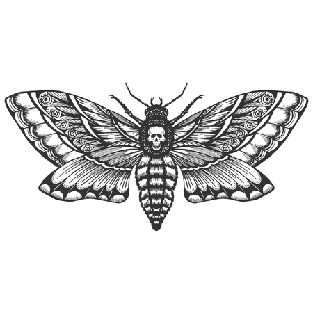 hand drrawn monochrome deadhead butterfly isolated vector Vetores