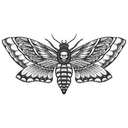 mano dibujada monocromo deadhead mariposa vector aislado Ilustración de vector
