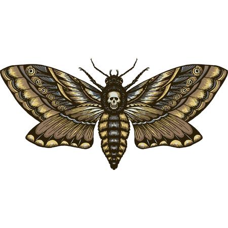 hand drrawn monochrome deadhead butterfly isolated vector Ilustração