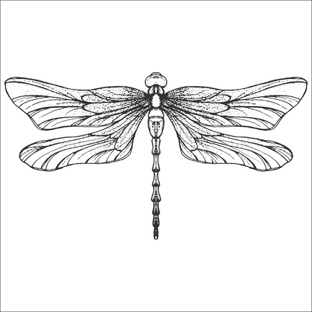 Hand drawn engraving Sketch of Dragonfly. Vector illustration for tattoo and handmade decorative brooch. Can be used for for postcard, t-shirt, fabric bag or poster. Insect collection.
