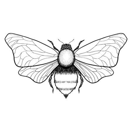 Beautiful hand drawn honey bee queen insect. Vector.