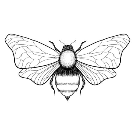 Beautiful hand drawn honey bee queen insect. Vector.