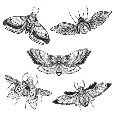 Beetle bug tattoo drawing set. Scarab bug illustration 向量圖像