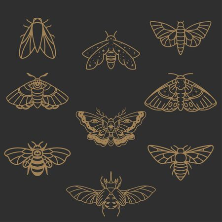 Insects icon set butterfly, fly, moth, skarab in minimalist style Çizim