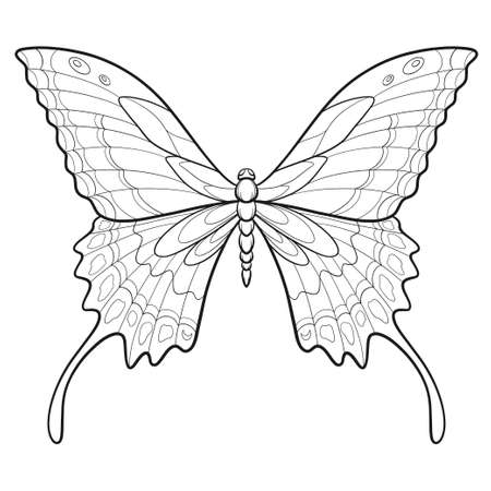 Hand drawn ornamental butterfly outline illustration with decorative ornaments