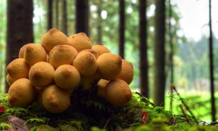wonderfull: wonderfull mushrooms