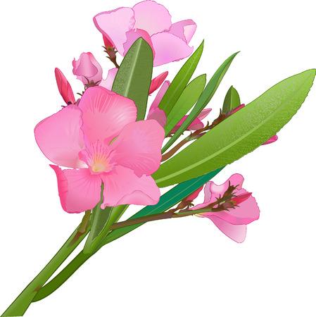 A vecror image of a flower. Saved as EPS8, @ jpg Vector