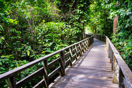 Wooden footpath on rain forest floor
