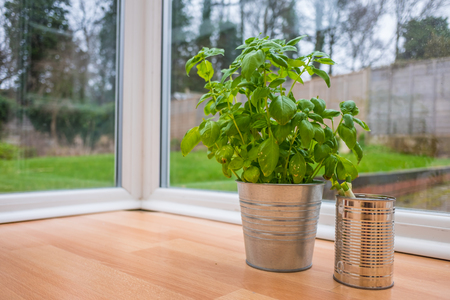 self sufficient: Growing various herbs and vegetable at home garden.