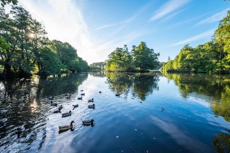 Wildlifes seen at the lake at Wollaton Park Stok Fotoğraf