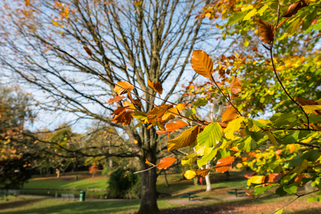 Golden autumn color in Grove Park, Harborne, Birmingham Stock Photo