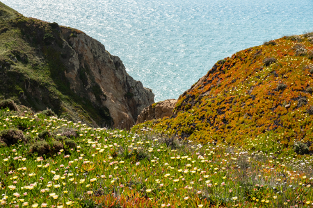 Wild flowers in full bloom at the rocky coast of Cabo da Roca, Portugal
