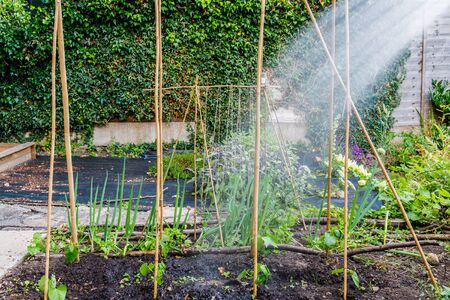 Watering of home grown vegetables in hot and dry summer months