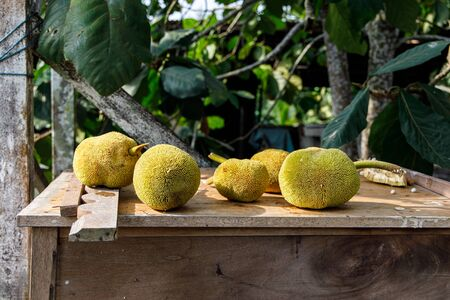 The exotic tarap fruit only found in Borneo Island