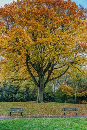 Golden Autumn color in Grove Park in Harborne. Stockfoto - 134869507