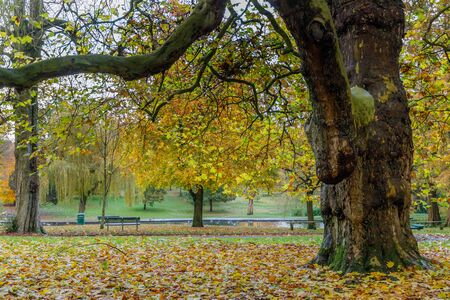 Golden Autumn color in Grove Park in Harborne. Stockfoto - 134869510