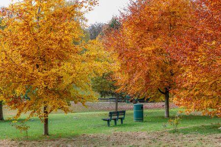 Golden Autumn color in Grove Park in Harborne.