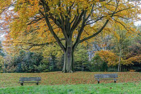 Golden Autumn color in Grove Park in Harborne. Stockfoto - 134869525