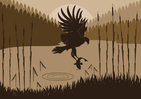 prey: Osprey hunting in wild nature foliage illustration Illustration