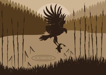 Osprey hunting in wild nature foliage illustration